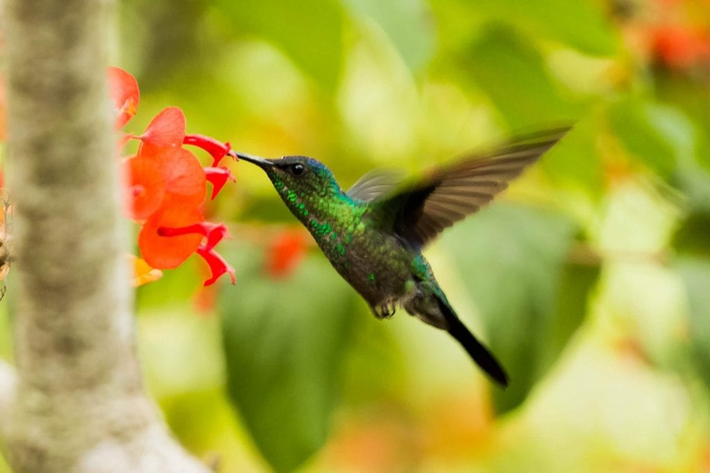 Google's Hummingbird update definition in SEO dictionary